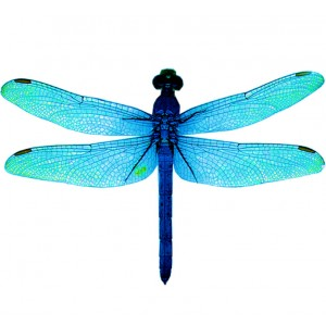 wing pack- dragonfly #1 blue
