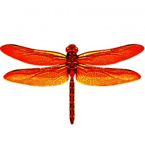 wing pack - dragonfly #1 orange