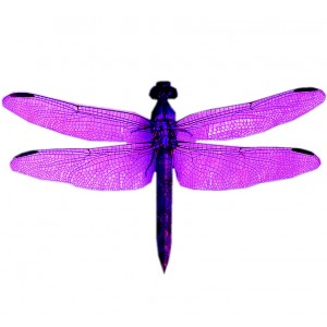 wing pack- dragonfly #1 purple