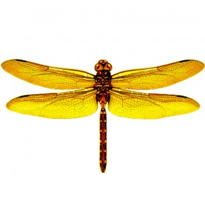 wing pack- dragonfly #1 yellow
